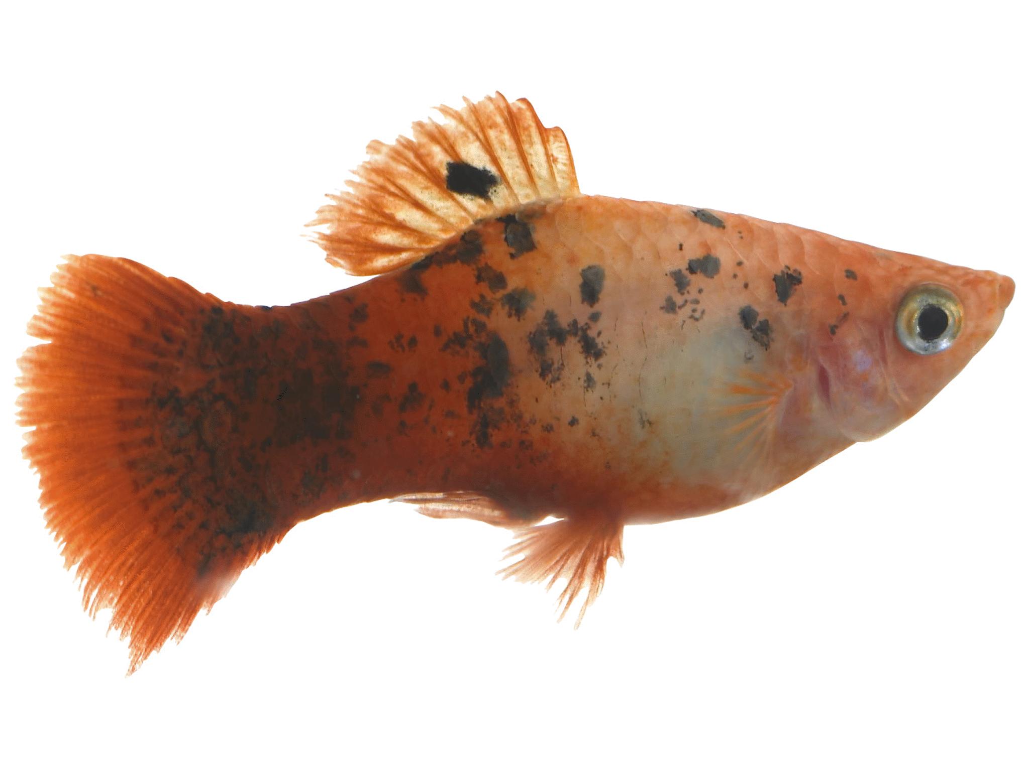 Live Fish | Meijer.com
