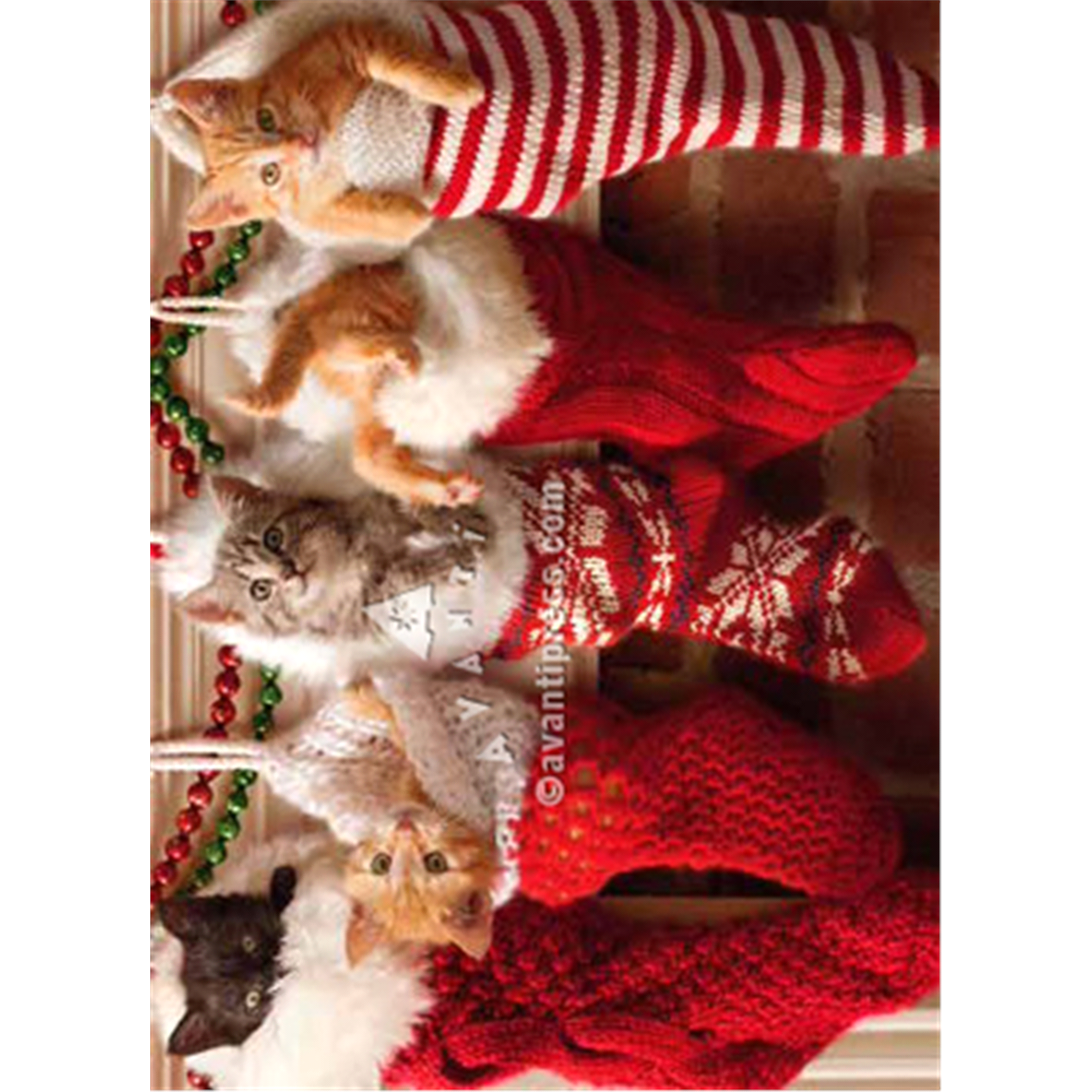 Boxed Christmas Cards Kittens in Christmas Stockings | Meijer.com