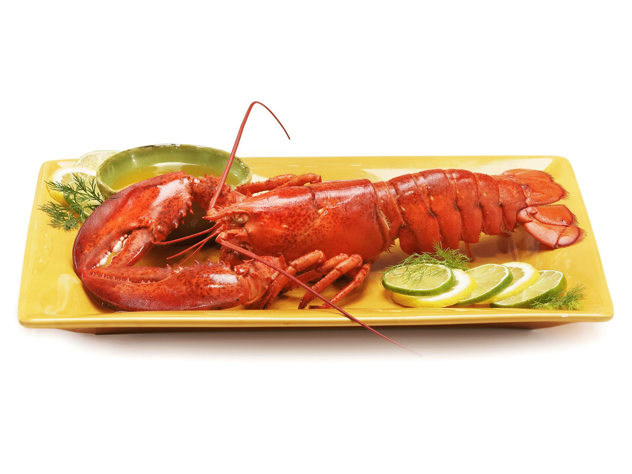 lobster com fresh live lobster meat seafood dept counter
