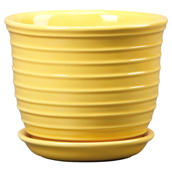 New England Pottery 6 Planter Jefferson Daffodil Meijer Com
