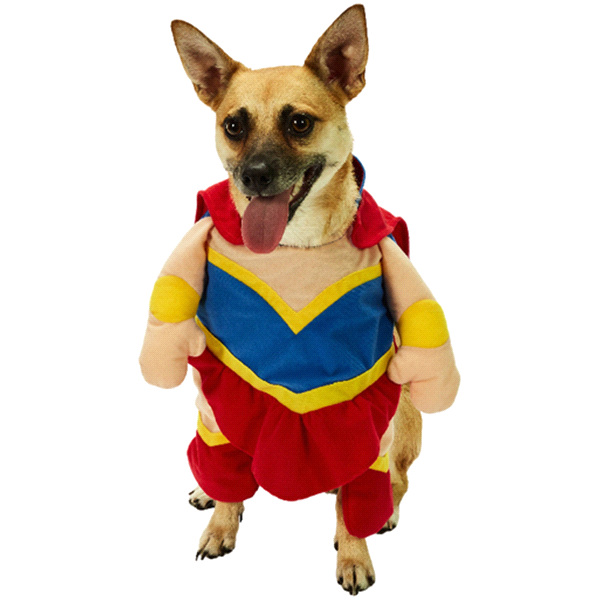 meijer super girl pet costume small meijer com