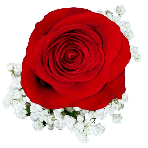 Single Red Rose w/Gyp Bouquet | Meijer.com