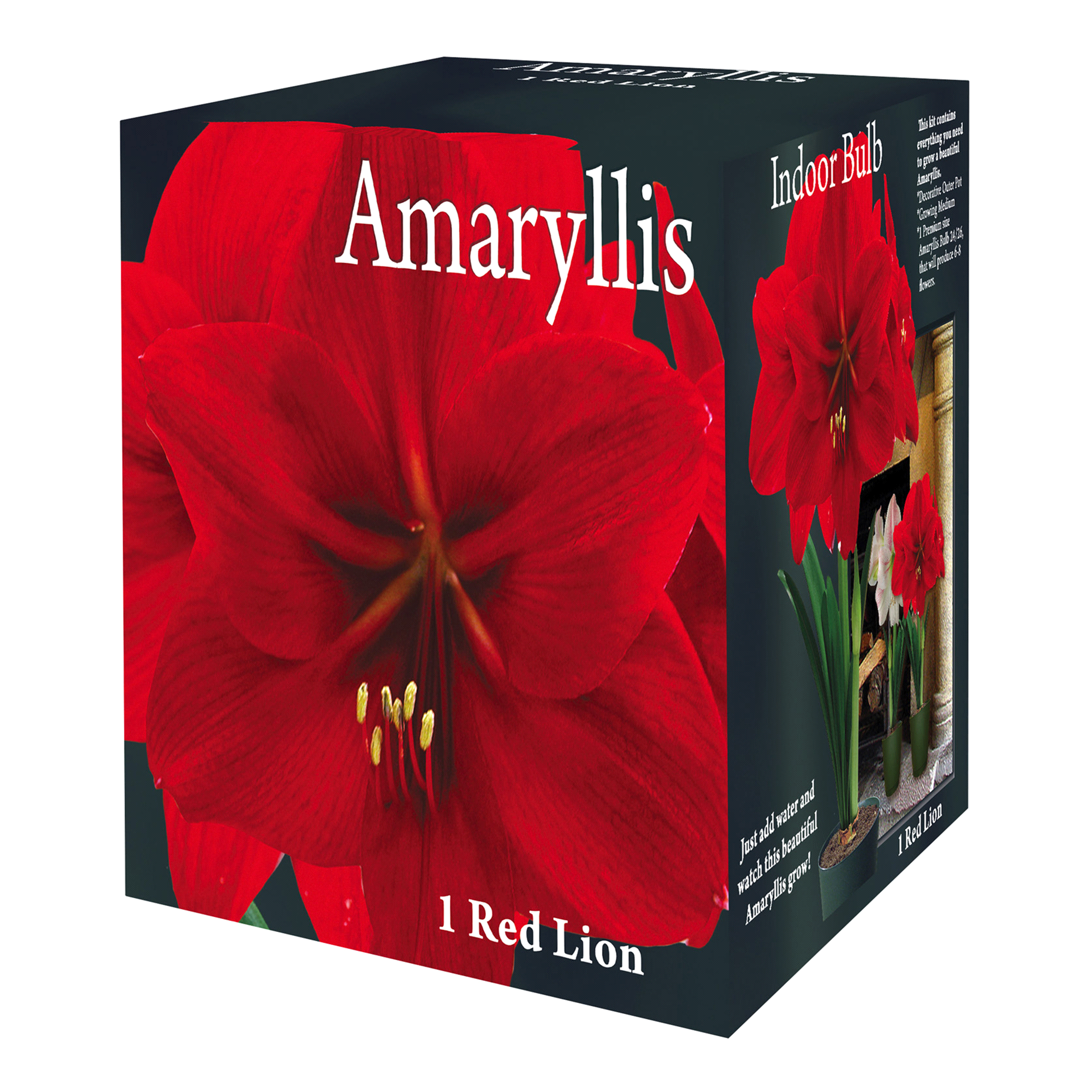 Red Lion Indoor Growing Amaryllis 1 Bulb | Meijer.com